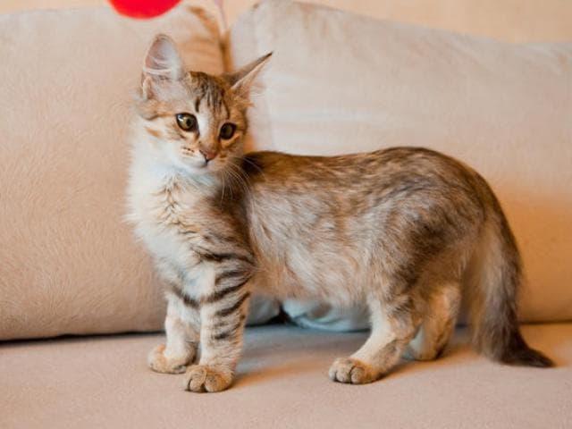 Отдам в дар: Котёнок-лапочка Ясмин в самые нежные ручки фото3
