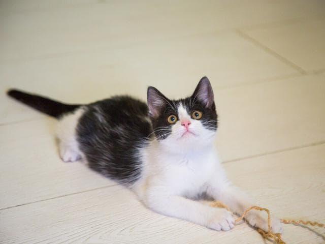 Отдам в дар: Котенок Шуша в добрые руки