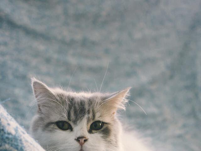 Отдам в дар: Кошечка Адель ищет дом фото3