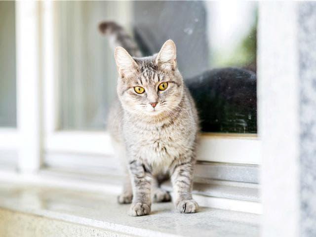 Отдам в дар: Очаровательная кошечка Туся ищет дом