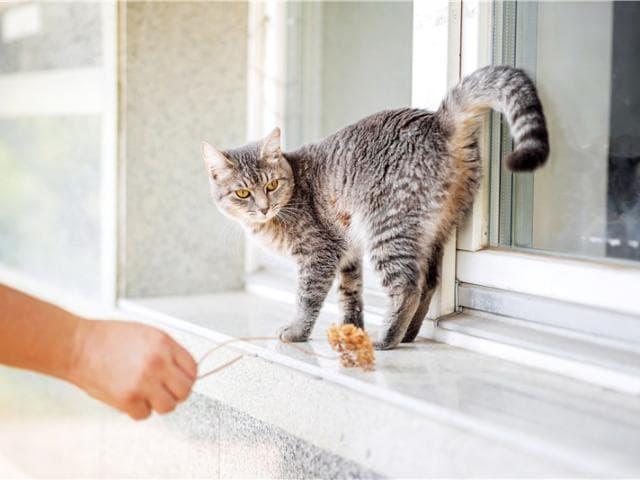 Отдам в дар: Очаровательная кошечка Туся ищет дом фото2