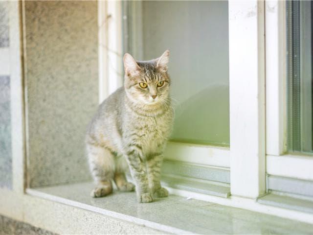 Отдам в дар: Очаровательная кошечка Туся ищет дом фото3