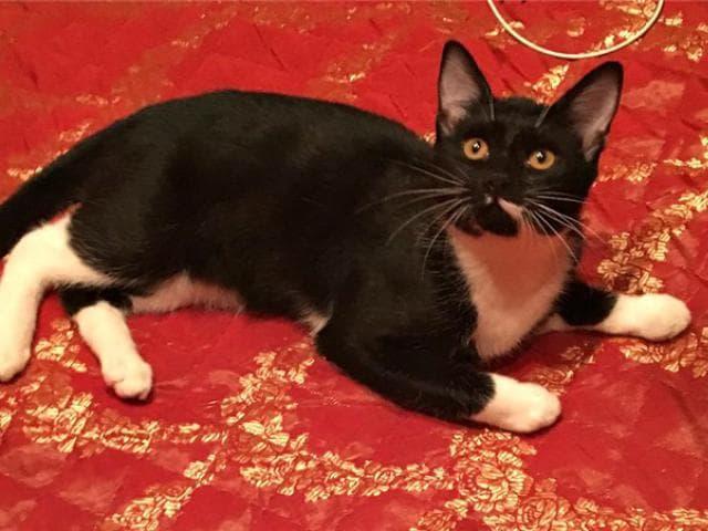 Отдам в дар: Котенок Барсик в добрые руки