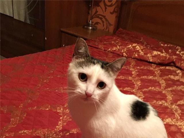 Отдам в дар: Чудесная кошка Муся в добрые руки