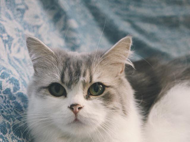 Отдам в дар: Кошечка Адель ищет дом фото2