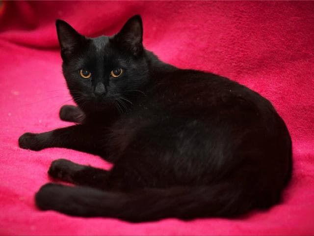 Отдам в дар: Ищем дом для кошечки - Муси и котика - Макса
