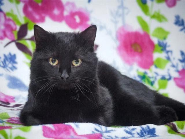 Отдам в дар: Ищем дом для кошечки - Муси и котика - Макса фото2