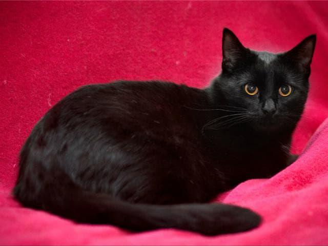 Отдам в дар: Ищем дом для кошечки - Муси и котика - Макса фото3