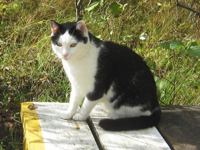Потерялся/Нашелся: Потерян черно белый кот