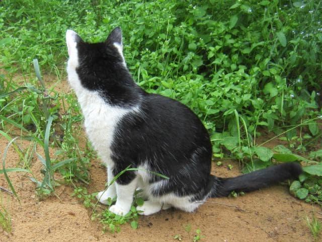 Потерялся/Нашелся: Потерян черно белый кот фото2