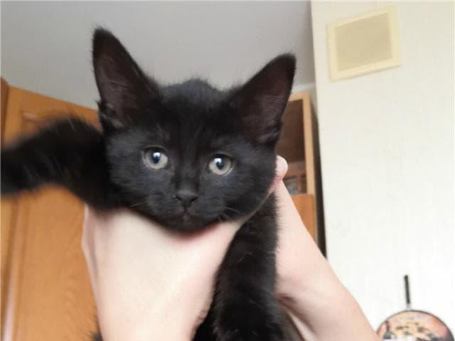 Отдам в дар: Три очаровательные котёнка в поисках любящего дома
