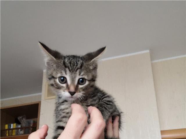 Отдам в дар: Три очаровательные котёнка в поисках любящего дома фото2