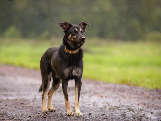 Отдам в дар: В дар, максимум любви на килограмм собаки фото3