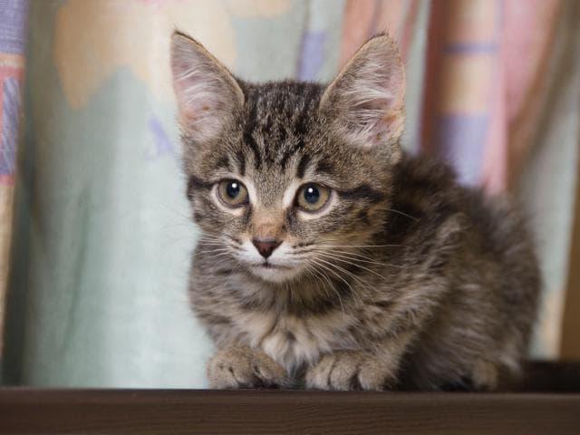 Отдам в дар: Очаровательные котята-мальчики ищут дом