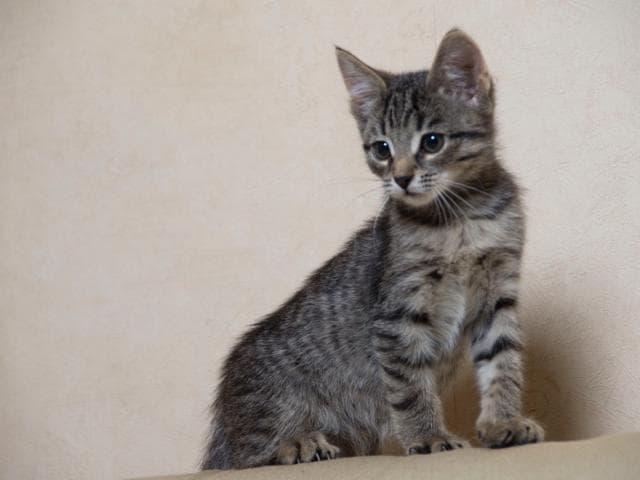 Отдам в дар: Очаровательные котята-мальчики ищут дом фото2