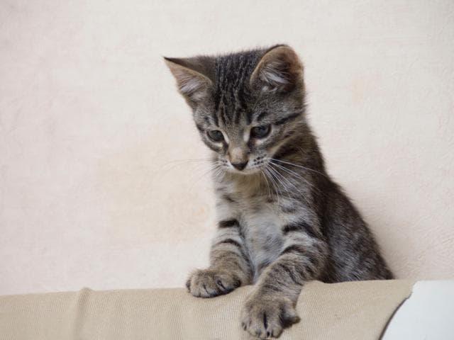 Отдам в дар: Очаровательные котята-мальчики ищут дом фото3