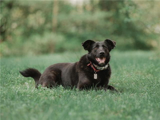 Отдам в дар: Чудесная собака Берта в добрые руки