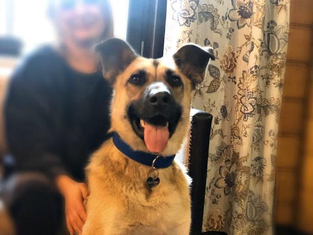 Отдам в дар: Ищет дом замечательный пёс Грей