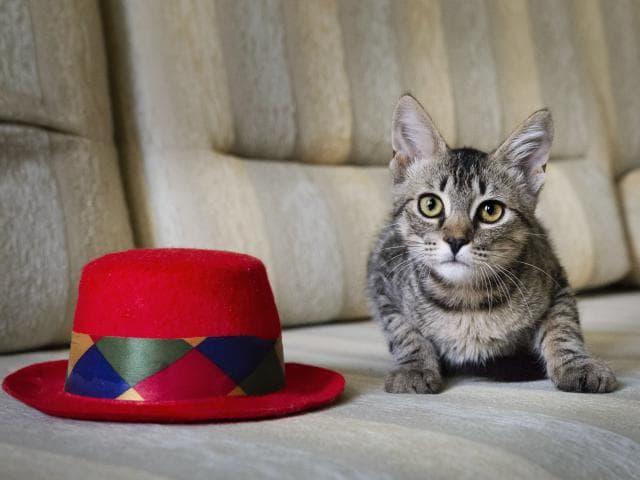 Отдам в дар: Котёнок в дар