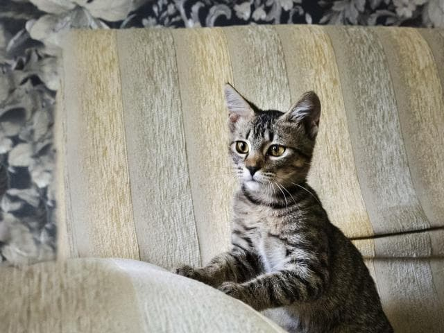 Отдам в дар: Котёнок в дар фото3
