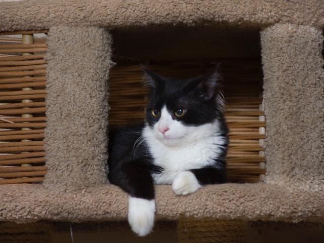 Отдам в дар: Котята Кузя, Барсик и Василиса ищут дом фото3