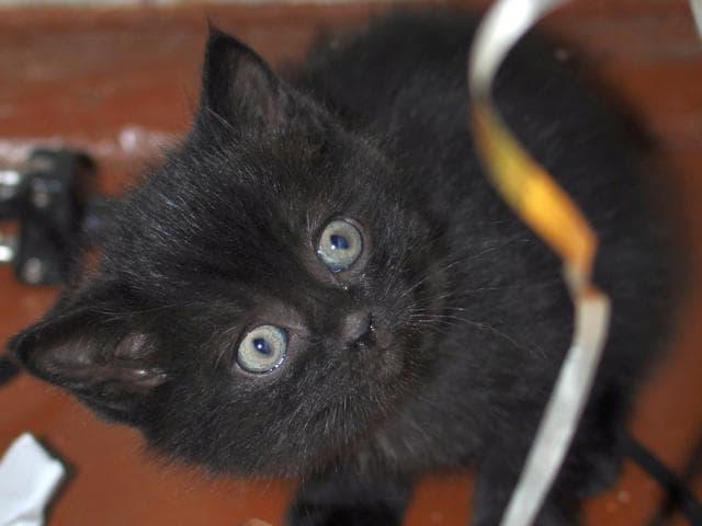 Отдам в дар: Котятки ищут любящих хозяев