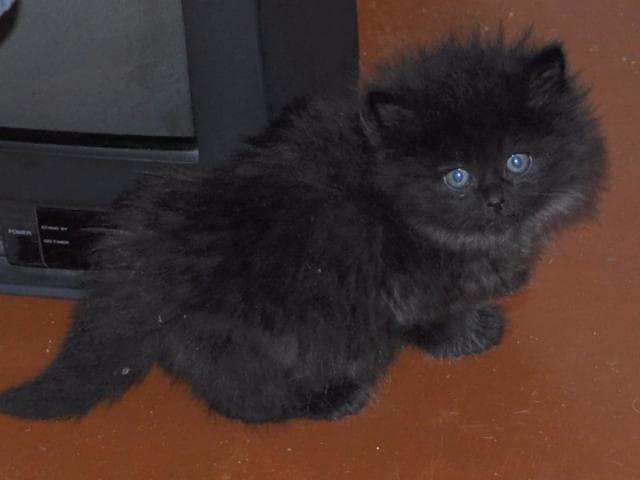 Отдам в дар: Котятки ищут любящих хозяев фото3