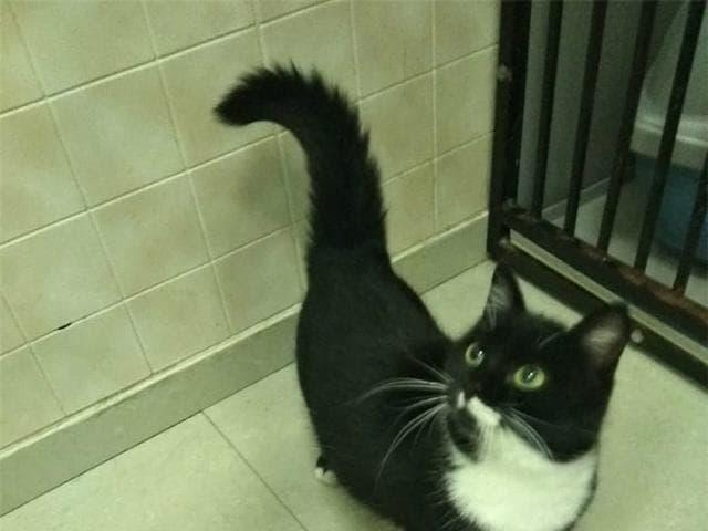 Отдам в дар: Очаровательный котенок- девочка ищет дом фото2
