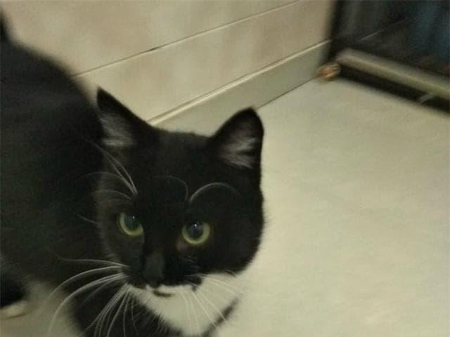 Отдам в дар: Очаровательный котенок- девочка ищет дом фото3