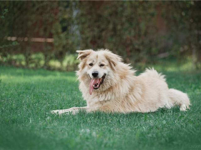 Отдам в дар: Шикарный пёс Нортон в добрые руки фото3