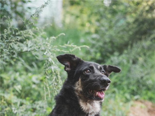 Отдам в дар: Чудесная собака Лада в добрые руки фото2