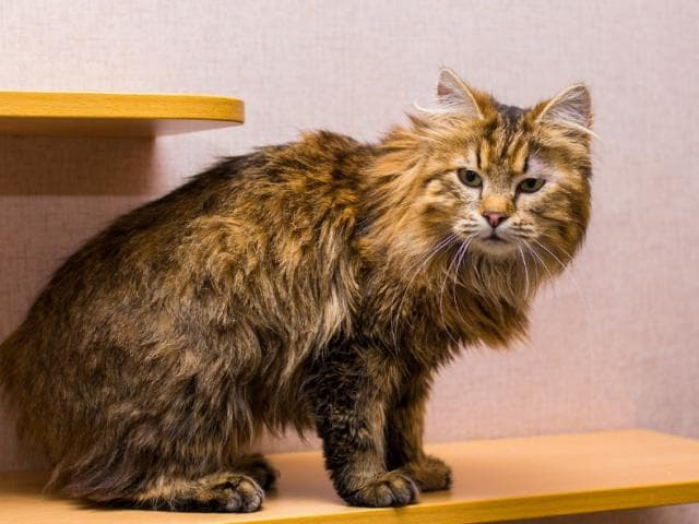 Отдам в дар: Кошечка Нора (2 года) в добрые руки фото3