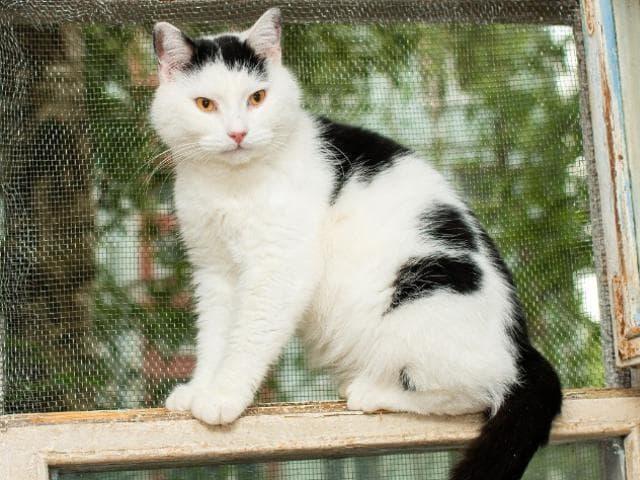 Отдам в дар: Нежный, трогательный котик Цезарь в добрые руки