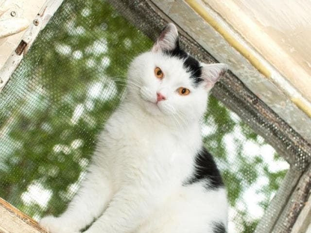 Отдам в дар: Нежный, трогательный котик Цезарь в добрые руки фото3