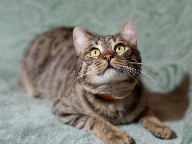 Отдам в дар: Ищет дом молодой котик Моисей фото3