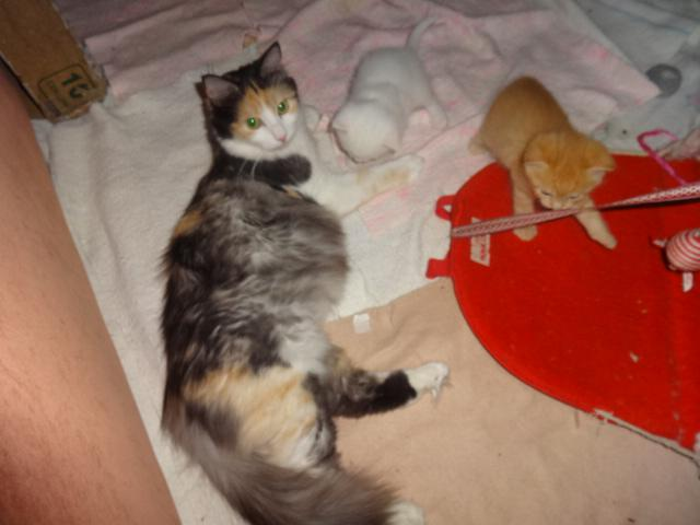 Продаю: резервирование необычных котят