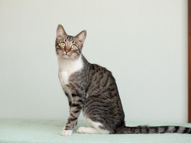 Отдам в дар: Ласковый котик Брюс в добрые руки в дар