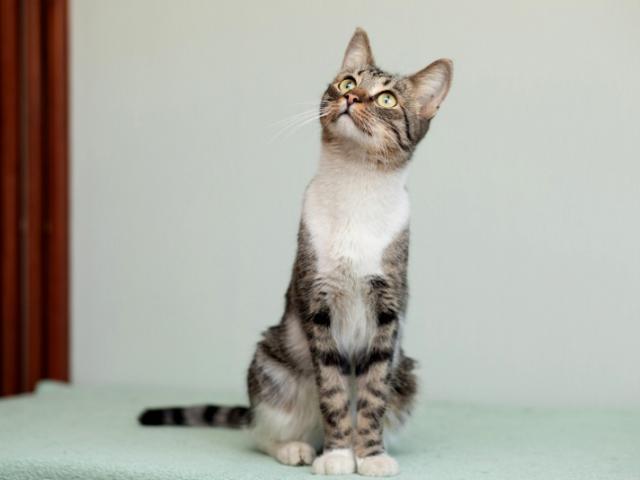 Отдам в дар: Ласковый котик Брюс в добрые руки в дар фото3