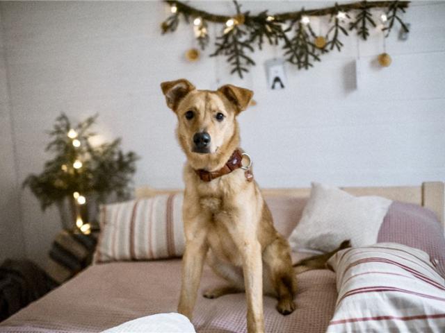 Отдам в дар: Чудесная собака Ева в добрые руки