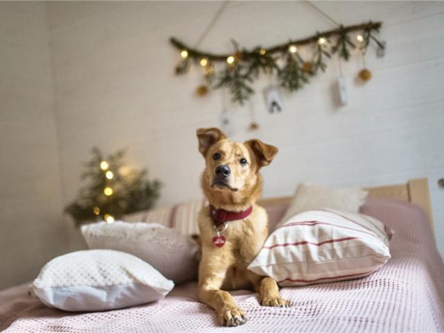 Отдам в дар: Чудесная собака Ева в добрые руки фото2