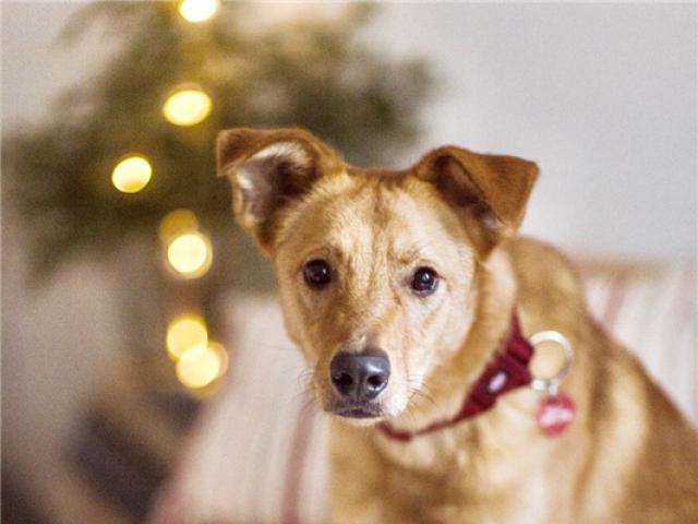 Отдам в дар: Чудесная собака Ева в добрые руки фото3