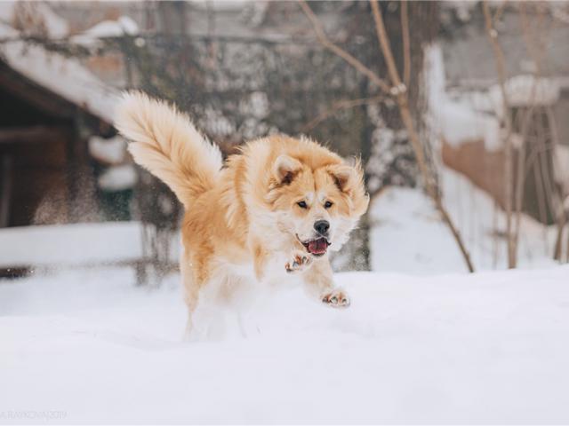 Отдам в дар: Шикарный пёс Нортон в добрые руки фото2