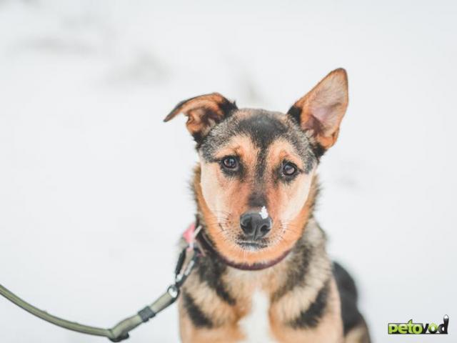 Отдам в дар: Потрясающая собака Талли в добрые руки