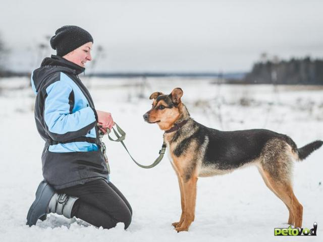 Отдам в дар: Потрясающая собака Талли в добрые руки фото2