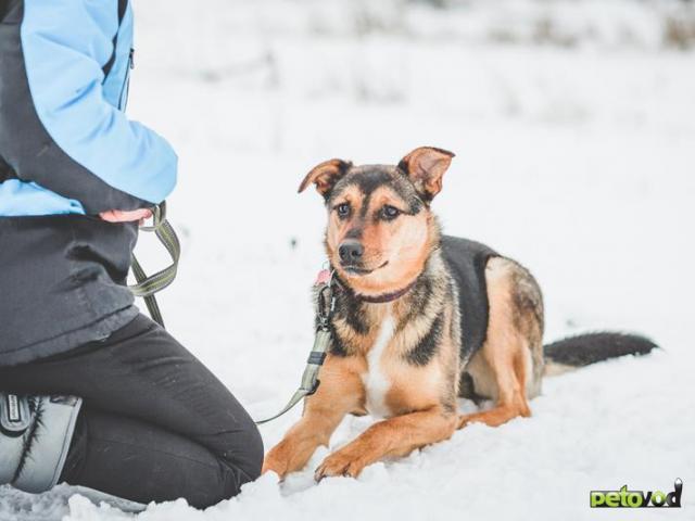 Отдам в дар: Потрясающая собака Талли в добрые руки фото3