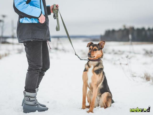 Отдам в дар: Потрясающая собака Талли в добрые руки фото4