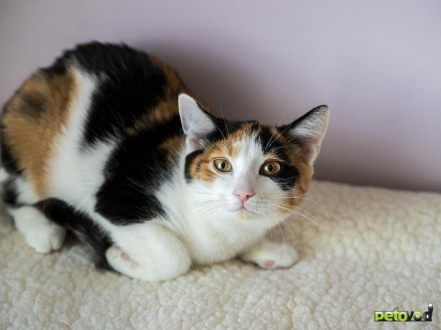 Продаю: Милый котенок ищет свою семью