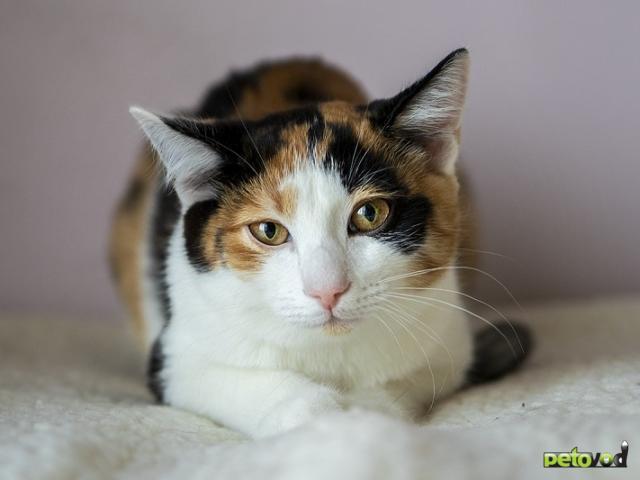 Продаю: Милый котенок ищет свою семью фото2
