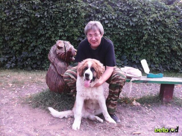Предлагаю услуги: Кинолог профессиональная дрессировка собак фото2