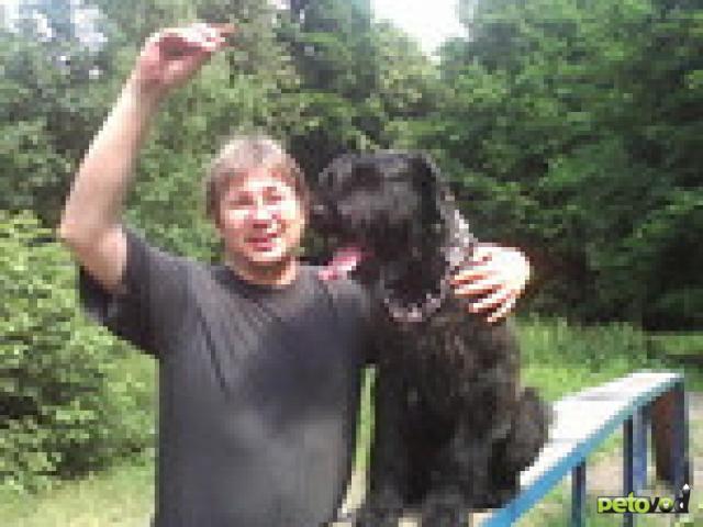 Предлагаю услуги: Кинолог профессиональная дрессировка собак фото3
